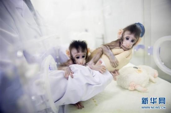(科技)(9)世界生命科学重大突破! 两只克隆猴在中国诞生
