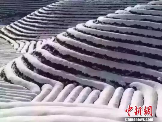 浙江迎低温雨雪天气多部门启动应对措施