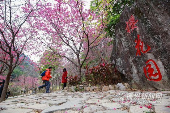 福州:森林公园樱花开 红花绿树引游人