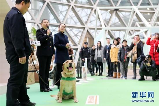 ()(1)上海科技馆举办狗年生肖展