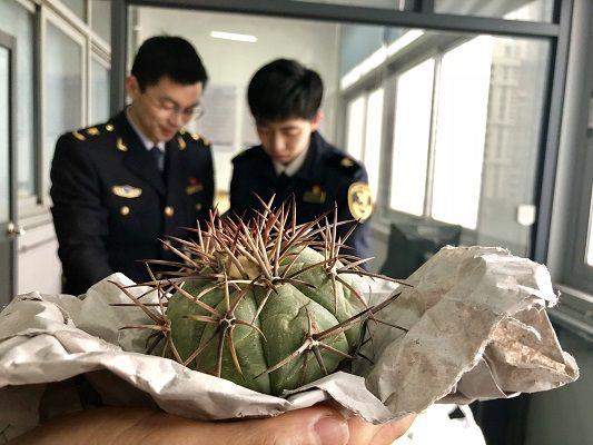 大量濒危植物在江苏苏州国际邮件口岸落网