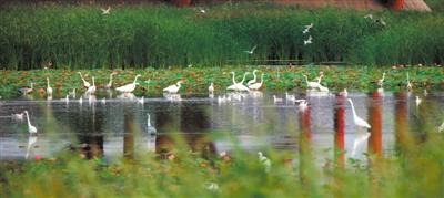 宁夏湿地:城市诗意生活的栖居地