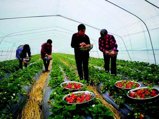 盐城盐都一居民创办家庭农场 带动30余人就业