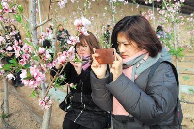 枝蔓挂满粉红花蕊