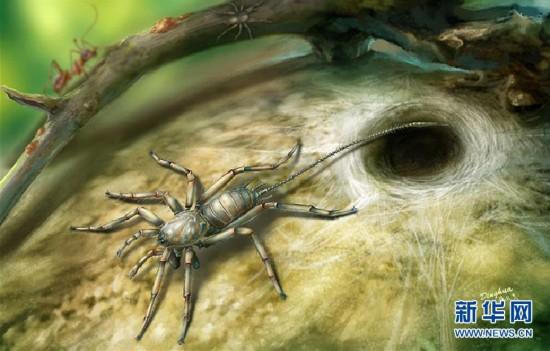 (图文互动)(3)研究发现1亿年前远古蜘蛛长有尾巴