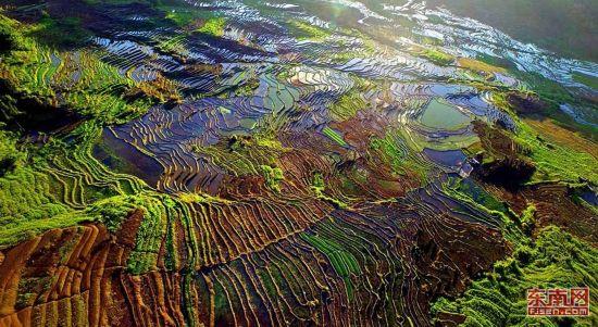 高清组图:尤溪联合梯田入选全球重要农业文化遗产