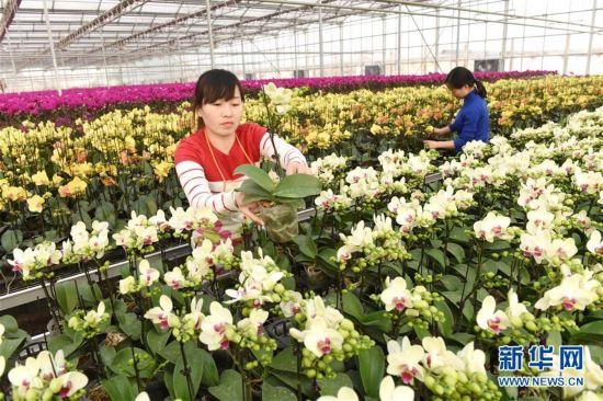 (ptpt9)(1)花卉飘香喜迎春