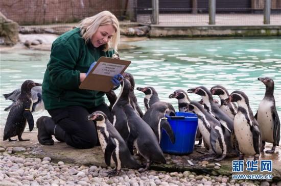 (国际)(1)伦敦动物园举行年度盘点