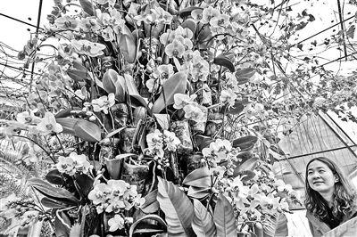 北京植物园:500种兰花迎春 活动从2月15日至21日