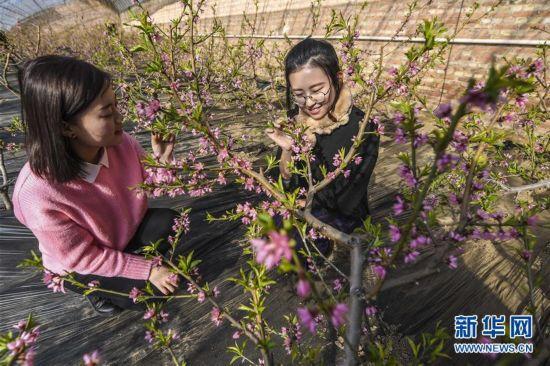 (新春走基层)(1)澳门正规博彩十大网站永清:鲜花迎春