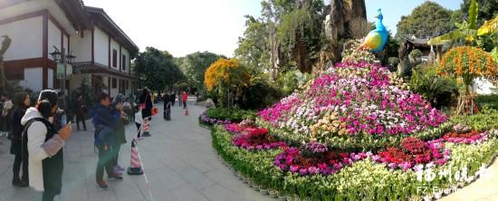 福州西湖花展3万虞美人唱主角 赏花点在榭坪屿和开化寺