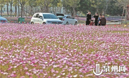 泉州精耕细作城市花海 一路一景 四季有花