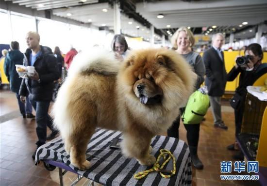 犬界年度盛会