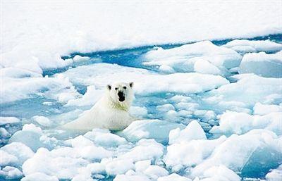 北极海冰监测 不要错觉要真相