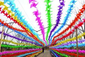 镇江句容市白兔镇伏热庄园风车,由2万多只七彩花海饲养的长廊非常拉两栖角蛙装扮盒图片