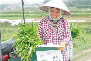 """龙华区品牌农业名头打响了 村民们尝""""甜头"""""""