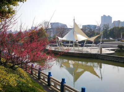 南通海安洋港河畔梅花盛开 春意盎然