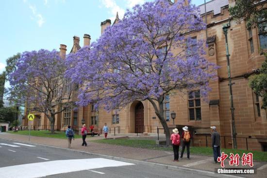 澳媒:世界大学专业排名出炉 护理学成澳优势学科