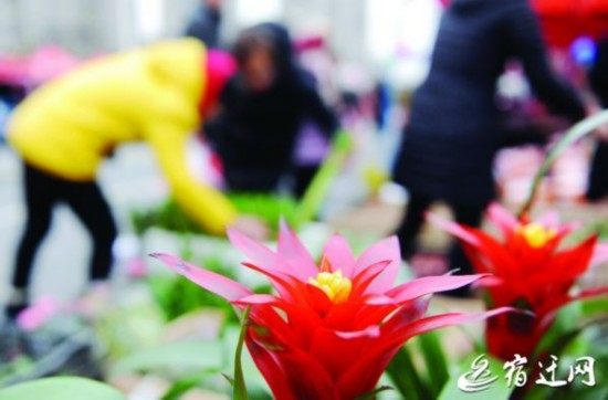 花卉走俏市场
