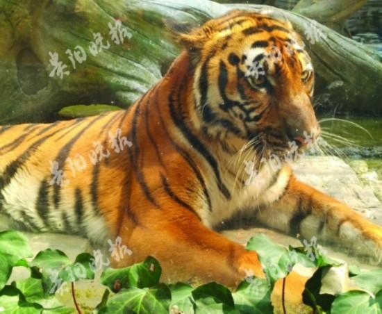"""2018年""""世界野生动植物日""""宣传活动在贵州森林野生动物园举行,贵州省"""
