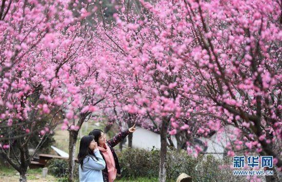 (社会)(1)红梅吐蕊迎春来