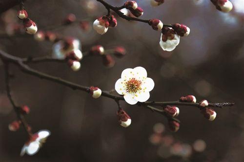 3月7日徐州阴有小雨 次日最低气温或降至-4℃