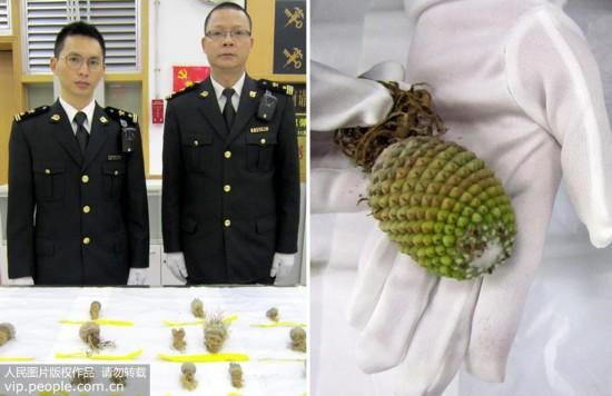 深圳海关查获14种奇异植物 或带有病菌
