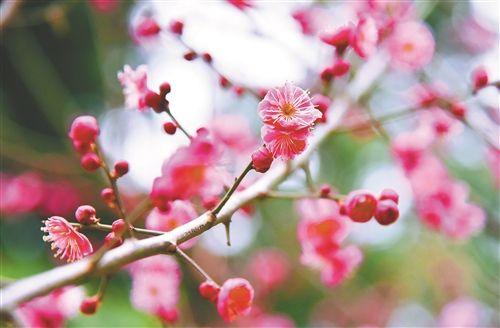 徐州云龙湖东岸春花盛开 引得路人驻足欣赏