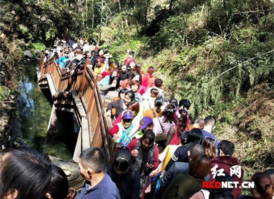 桃花源景区迎来今年第一次游客最高峰
