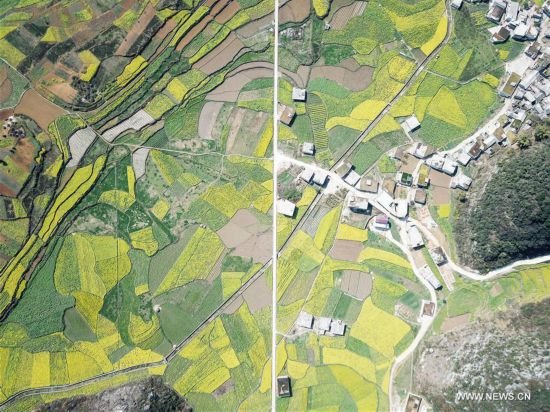 Aerial photos of rape flowers in China's Guizhou