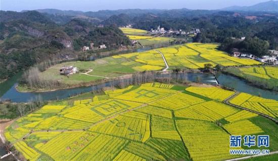 这是3月10日拍摄的江西省萍乡市湘东区东桥镇万亩油菜花基地(无人机
