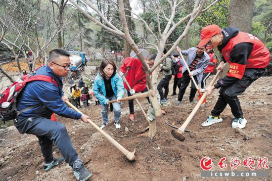 昨日,在麓山景区,市民为自己认植的树木培土施肥。    长沙晚报记者 王志伟 摄