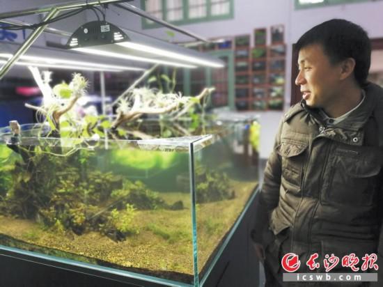 迷奇水族的周波站在一个已经造景的鱼缸旁,向记者介绍公司的发展情况。  长沙晚报记者 伍玲 摄
