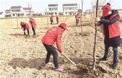 爱绿护绿 南通海门多地组织志愿者义务植树