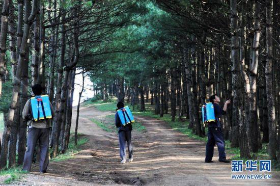 """(图文互动)(2)贵州沙子坡林场:三代护林员守护一片""""林海"""""""
