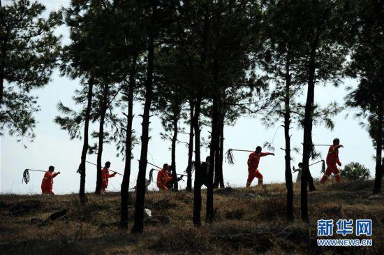 """(图文互动)(6)贵州沙子坡林场:三代护林员守护一片""""林海"""""""