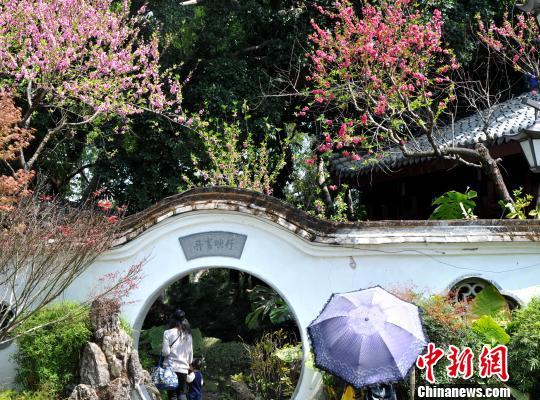 近日,福州西湖公园内桃花争相开放,吸引了许多市民和游客前来踏青赏花。 张斌 摄