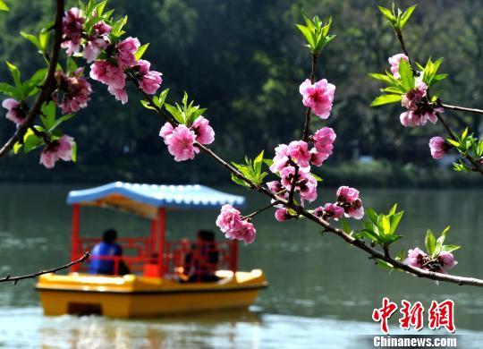 图为游客划着小船在公园内赏花。 张斌 摄