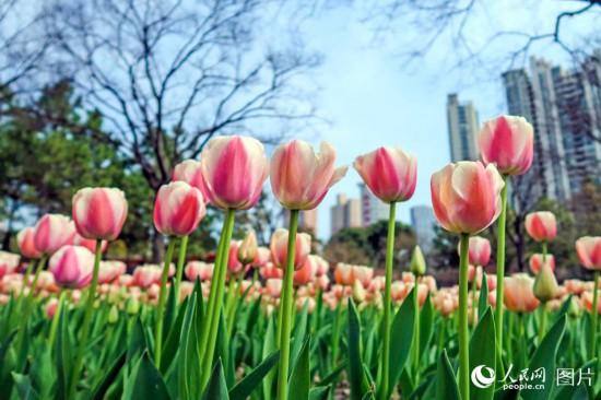 上海静安雕塑公园春花烂漫 市民踏春赏花乐不停【12】