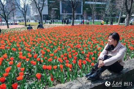 上海静安雕塑公园春花烂漫 市民踏春赏花乐不停【8】