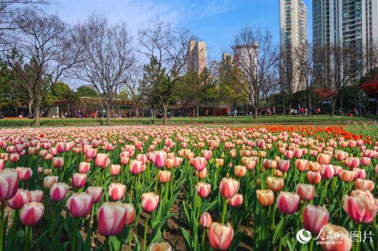 上海静安雕塑公园春花烂漫 市民踏春赏花乐不停【4】