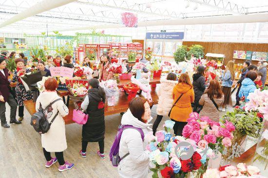 盐城大丰荷兰花海花卉品种达300个 供游客选购
