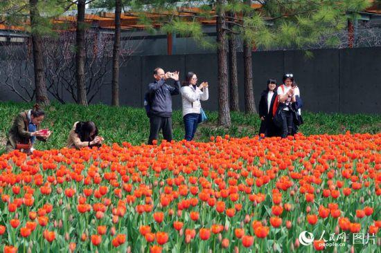 上海静安雕塑公园春花烂漫 市民踏春赏花乐不停【5】