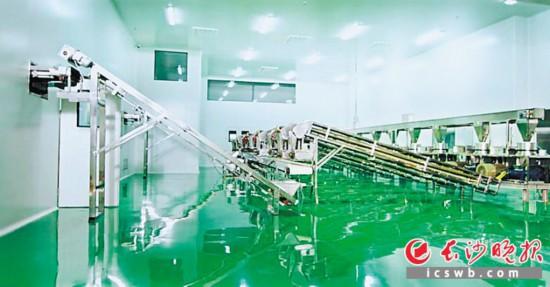 湖南省面筋行业建成投用的首个10万级GMP生产车间地面洁净如镜,生产设备难觅一点灰尘。  陈玄 摄