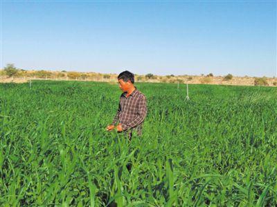 宁夏专家任学山:在撒哈拉沙漠播种绿色