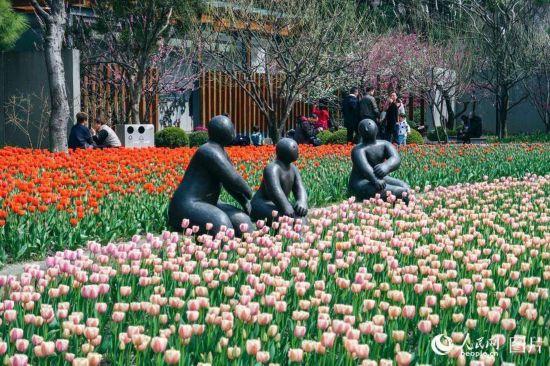 上海静安雕塑公园春花烂漫 市民踏春赏花乐不停【7】