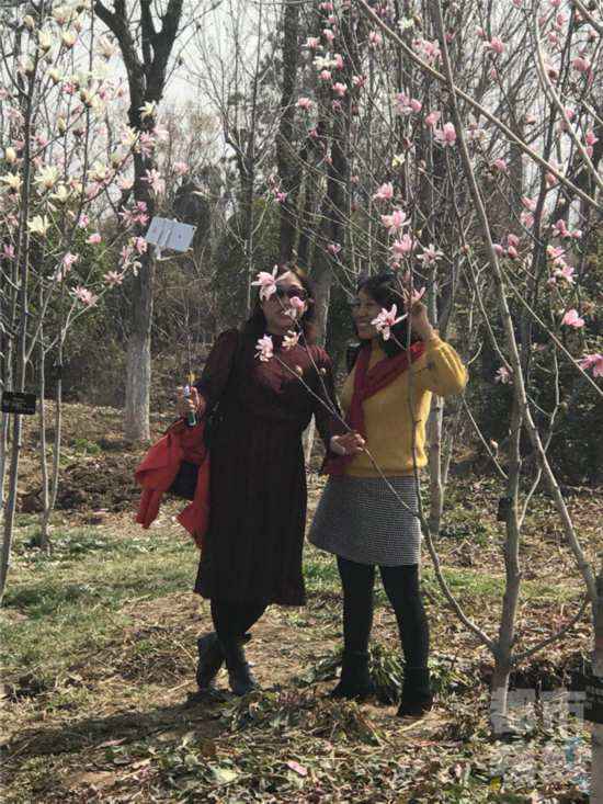 植物十里分解你西安教学园里木兰花香四溢应美凤木兰拳一路42式不如春风图片