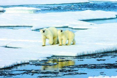 研究人员共分析:北极春来早