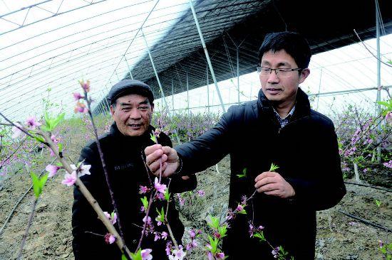 盐都大冈镇发展特色桃果业 引来23个项目入园