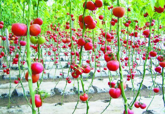 徐州沛县打造精品园区 高效农业面积持续扩大